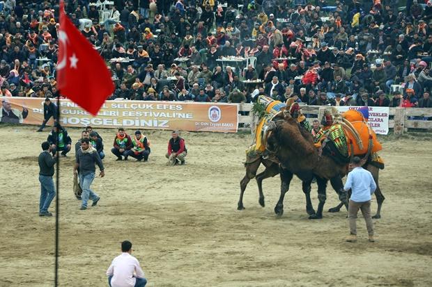 selcuk-efes-deve-guresleri-festivali (14)