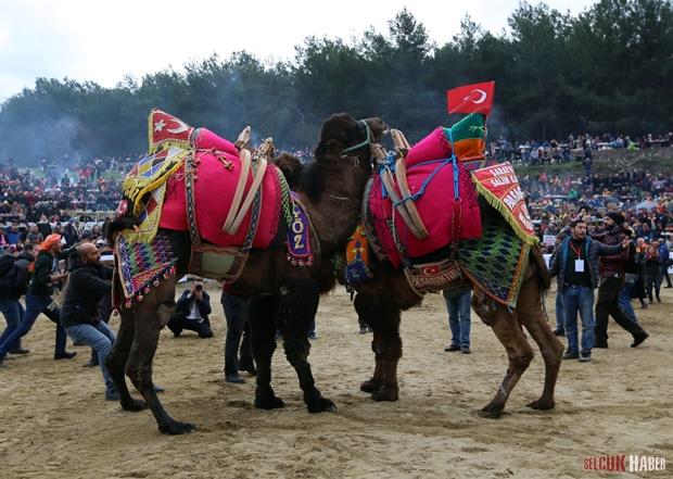 selcuk-efes-deve-guresleri-festivali (20)